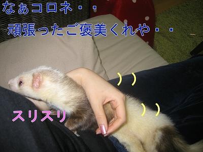 20060525221747.jpg