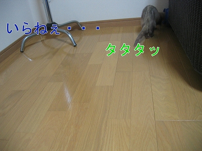20060525221801.jpg