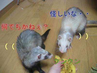 20060525221809.jpg
