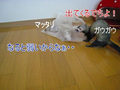 2007.4.1.5.jpg