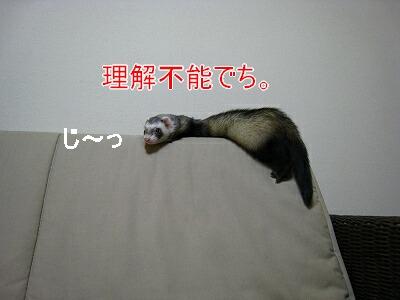 IMG_0712.jpg