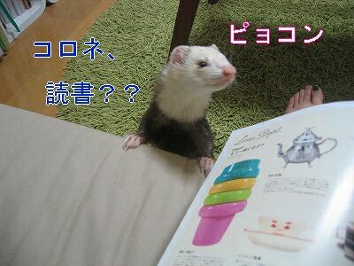 IMG_2771.jpg