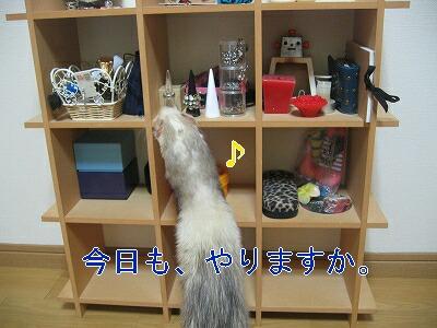 IMG_3169.jpg
