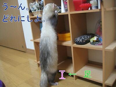 IMG_3172.jpg