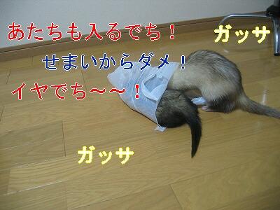 IMG_3226.jpg