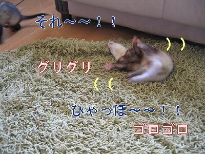 IMG_3451.jpg