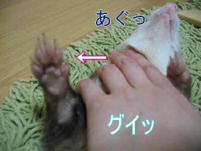 IMG_3528.jpg