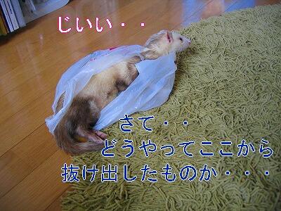 IMG_3831.jpg