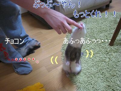 IMG_3898.jpg