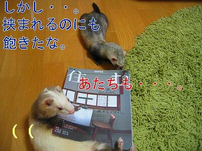 IMG_3968.jpg