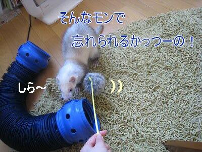 IMG_4121.jpg