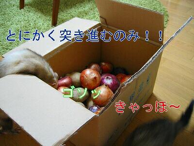 IMG_4663.jpg