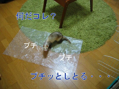 IMG_4728.jpg