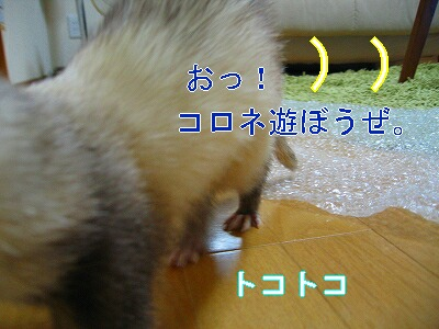 IMG_4729.jpg