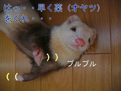 IMG_4903.jpg