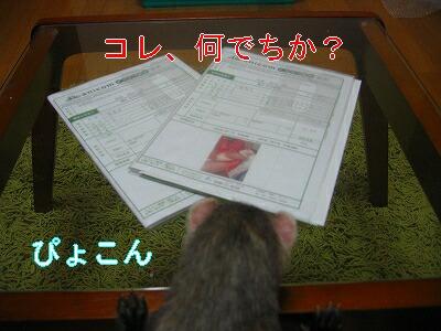 IMG_4913.jpg