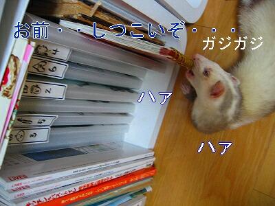 IMG_5152.jpg