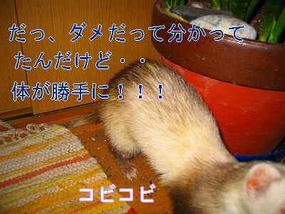IMG_5174.jpg
