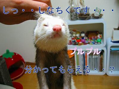 IMG_5220.jpg