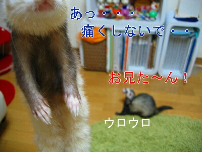 IMG_5224.jpg
