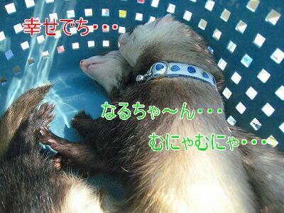 IMG_5262.jpg