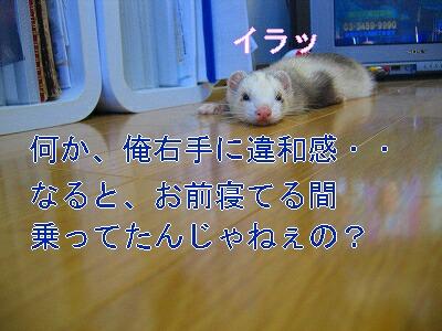 IMG_5311.jpg