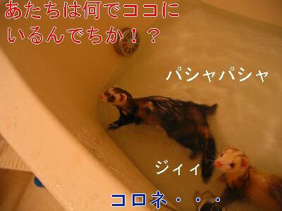 IMG_5345.jpg