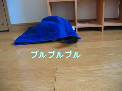 IMG_5347.jpg