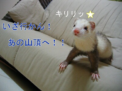 IMG_5767.jpg