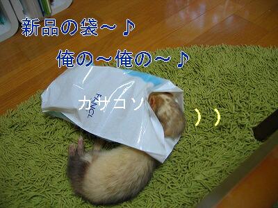 IMG_6178.jpg