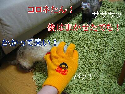 IMG_6340.jpg