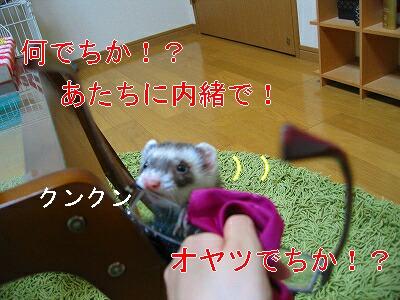 IMG_6374.jpg