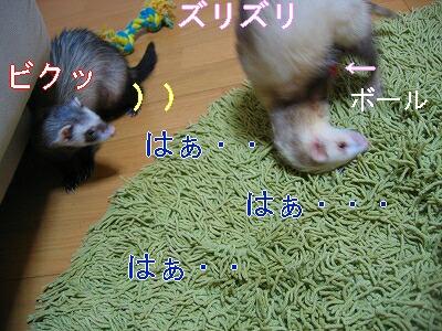 IMG_6391.jpg