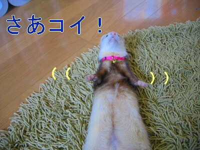 IMG_6643.jpg