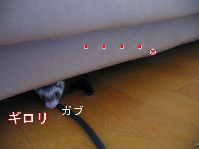 IMG_7148.jpg
