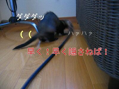IMG_7152.jpg