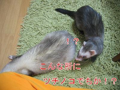 IMG_7507.jpg