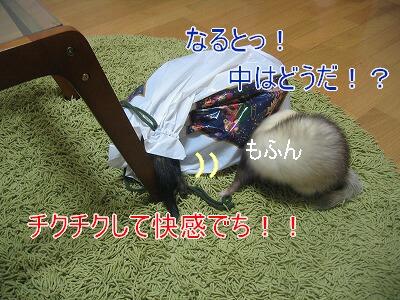 IMG_8234.jpg