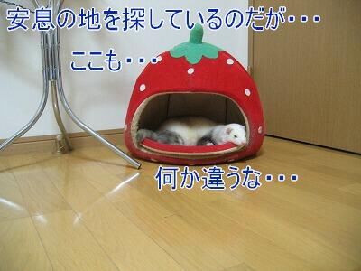IMG_8455.jpg