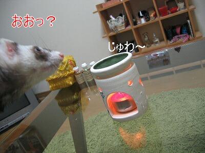 IMG_8937.jpg