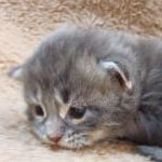 kitten-3-2.jpg