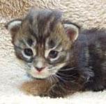 kitten-3-3.jpg