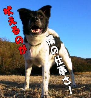 kooyoo-06.2.13.jpg