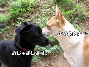 yoo-ma-2.jpg