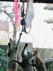 ブラジャー&猫画像