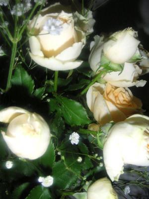 20060412201149.jpg