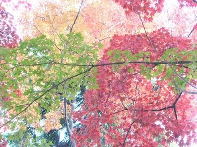 kyoto-11-27-05.jpg