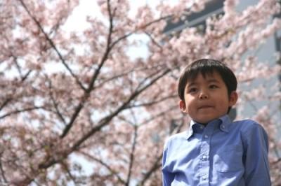 桜とこた入学式