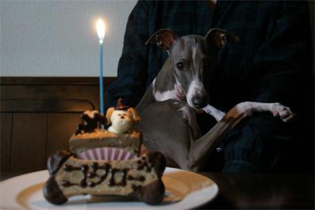 誕生日のお祝いにビックリのイタグレ小太郎