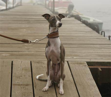 桟橋で佇むイタグレ小太郎